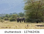 Small photo of Two adult elephants stand contrariwise near acacia tree on savanna meadow against mountain slope background. Lake Manyara National Park, Tanzania, Africa.