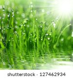 fresh grass with dew drops... | Shutterstock . vector #127462934