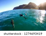 pod of dolphin swim next to the ... | Shutterstock . vector #1274693419