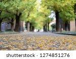 ginkgo yellow leaves  inside...   Shutterstock . vector #1274851276