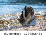 canister overgrown with mussels ... | Shutterstock . vector #1274866483