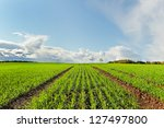 Country Landscape With Growing...