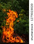 fire and firewood in a burning... | Shutterstock . vector #1275023020