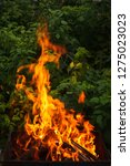 fire and firewood in a burning... | Shutterstock . vector #1275023023