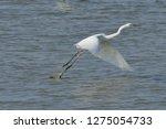 white heron taking off on the...   Shutterstock . vector #1275054733