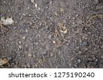 soil texture with withered... | Shutterstock . vector #1275190240