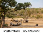 group of 12 white rhinos around ...   Shutterstock . vector #1275287020