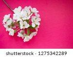 cherry blossoms on pink paper... | Shutterstock . vector #1275342289