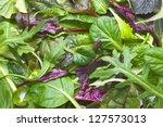 Various Herbs Background