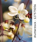 closeup lovely tropical white... | Shutterstock . vector #127575056