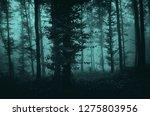 dark fantasy mysterious forest... | Shutterstock . vector #1275803956