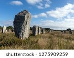 megalithic site of carnac ... | Shutterstock . vector #1275909259