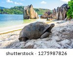 Stock photo aldabra giant tortoise turtle in seychelles on the beach near to praslin 1275987826