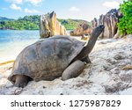 Stock photo aldabra giant tortoise turtle in seychelles on the beach near to praslin 1275987829
