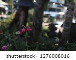 pretty flowers blooming in the... | Shutterstock . vector #1276008016