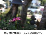 pretty flowers blooming in the... | Shutterstock . vector #1276008040
