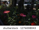 pretty flowers blooming in the... | Shutterstock . vector #1276008043