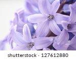 Beautiful Hyacinth  Background...