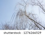 powerful weeping branches | Shutterstock . vector #1276266529