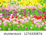 Beautiful Colorful Flowerbed O...