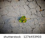 leaf drop on the cracked floor | Shutterstock . vector #1276453903