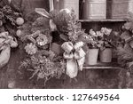 Christmas Reef in Black and White Sepia Tone - stock photo