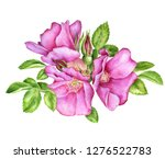 Watercolor Drawingwild Roses...