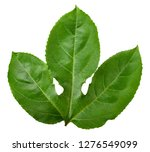 passion fruit leaf isolated... | Shutterstock . vector #1276549099