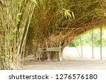 natural lush bamboo from... | Shutterstock . vector #1276576180