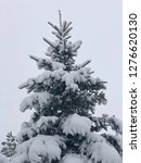 pine tree under snow in winter | Shutterstock . vector #1276620130