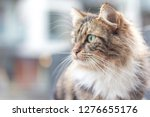 close up of a striped furry... | Shutterstock . vector #1276655176