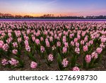 colorful blooming flower field...   Shutterstock . vector #1276698730