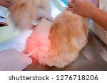 veterinary taking the... | Shutterstock . vector #1276718206