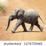 baby african elephant crosses... | Shutterstock . vector #1276725460