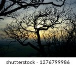 tree branches in silhouette ... | Shutterstock . vector #1276799986