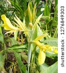 dharma flower  are  herbs  | Shutterstock . vector #1276849303