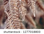 Frosted Fern Detail