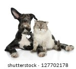 Stock photo cat and dog looking at camera isolated on white background 127702178
