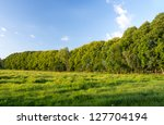 Green Treeline In Summertime