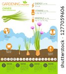 chives onion beneficial... | Shutterstock .eps vector #1277059606