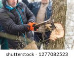 forester cutting yule log tree. ... | Shutterstock . vector #1277082523