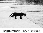 Stock photo black and white pictures of black cats walking through the road to the other side giving a feeling 1277108800