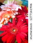 bouquet of gerberas. colorful... | Shutterstock . vector #1277161906