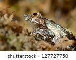 colorful frog in terrarium | Shutterstock . vector #127727750