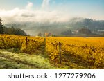 A vineyard near Salem, Oregon in the fall season.  Leaves have turned a yellow hue.