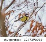 parus major  a small european...   Shutterstock . vector #1277290096
