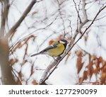 parus major  a small european...   Shutterstock . vector #1277290099