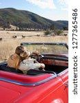 loving mature couple driving... | Shutterstock . vector #1277365486