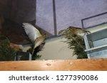 prepare for landing   european... | Shutterstock . vector #1277390086
