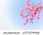 sakura. lush branches with... | Shutterstock .eps vector #1277579596